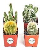 Shop Succulents Cool Cactus Live   Hand Selected