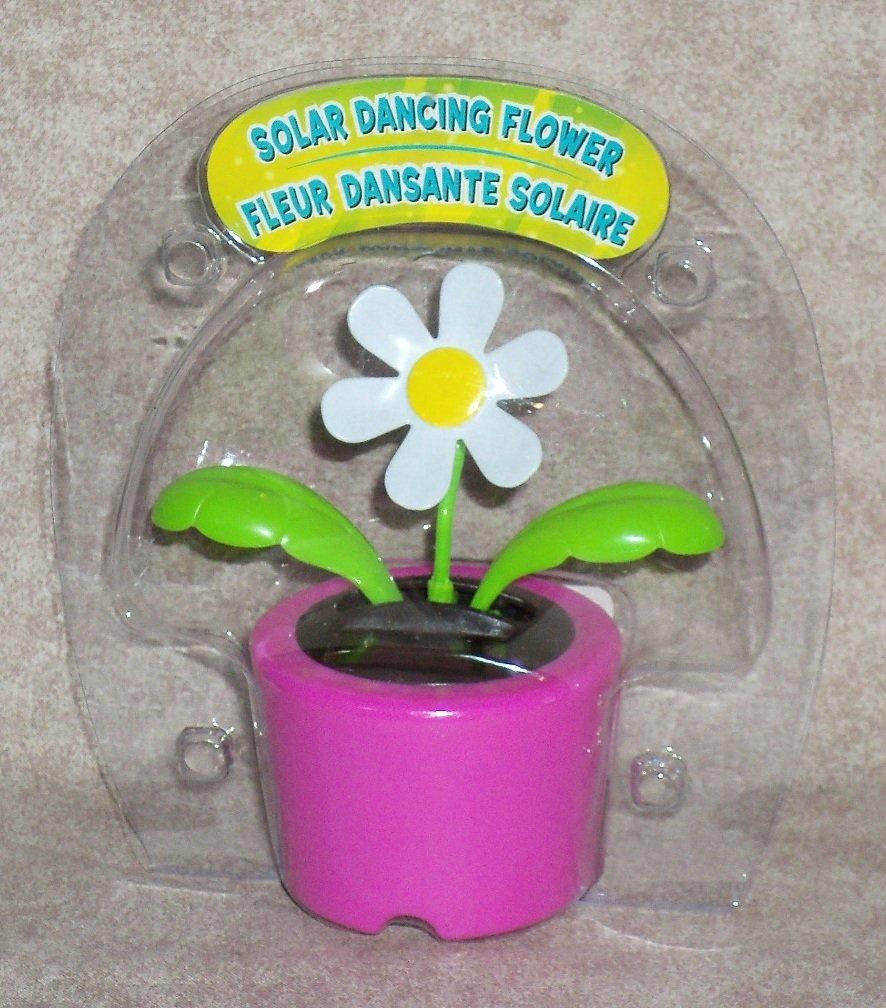 Solar Dancing ''DAISY'' Flower (Bubble Package) - PINK Pot