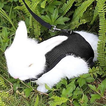 Correa para Chaleco de tracci/ón para Mascotas Qchengsan Arn/és Suave con Correa para Conejos arn/és para pasear a Conejo Conejo el/ástico