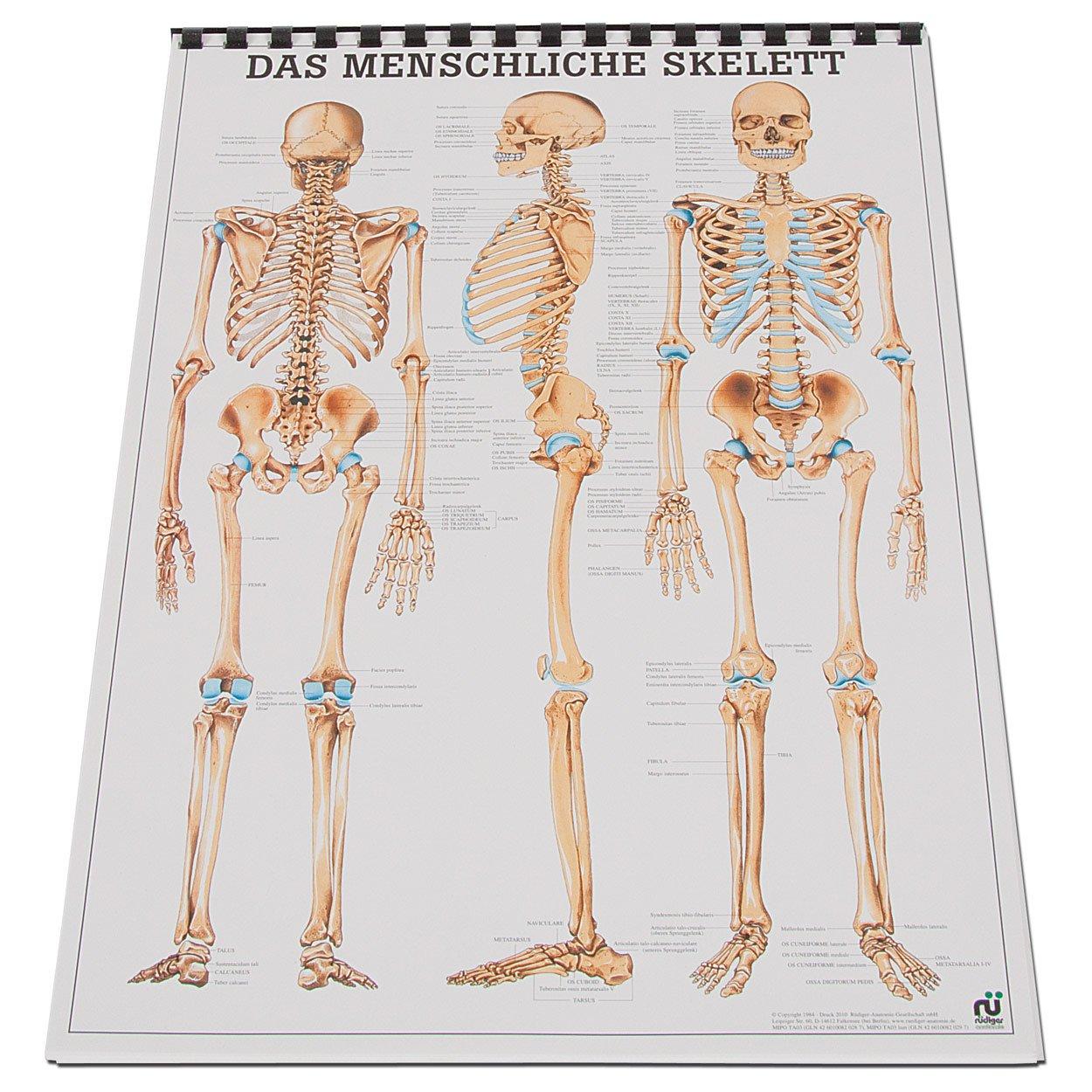 Niedlich Watch Online Grau Anatomie Zeitgenössisch - Anatomie Ideen ...