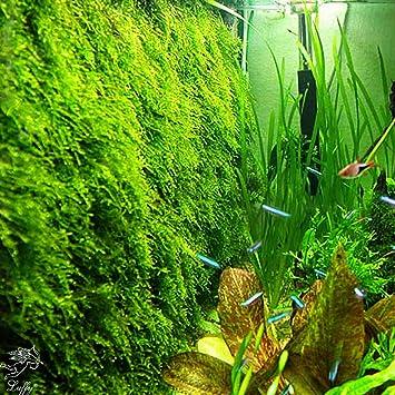 Luffy Aquatic Moss Wall Floor Mesh Kit On Fish Tank Plants