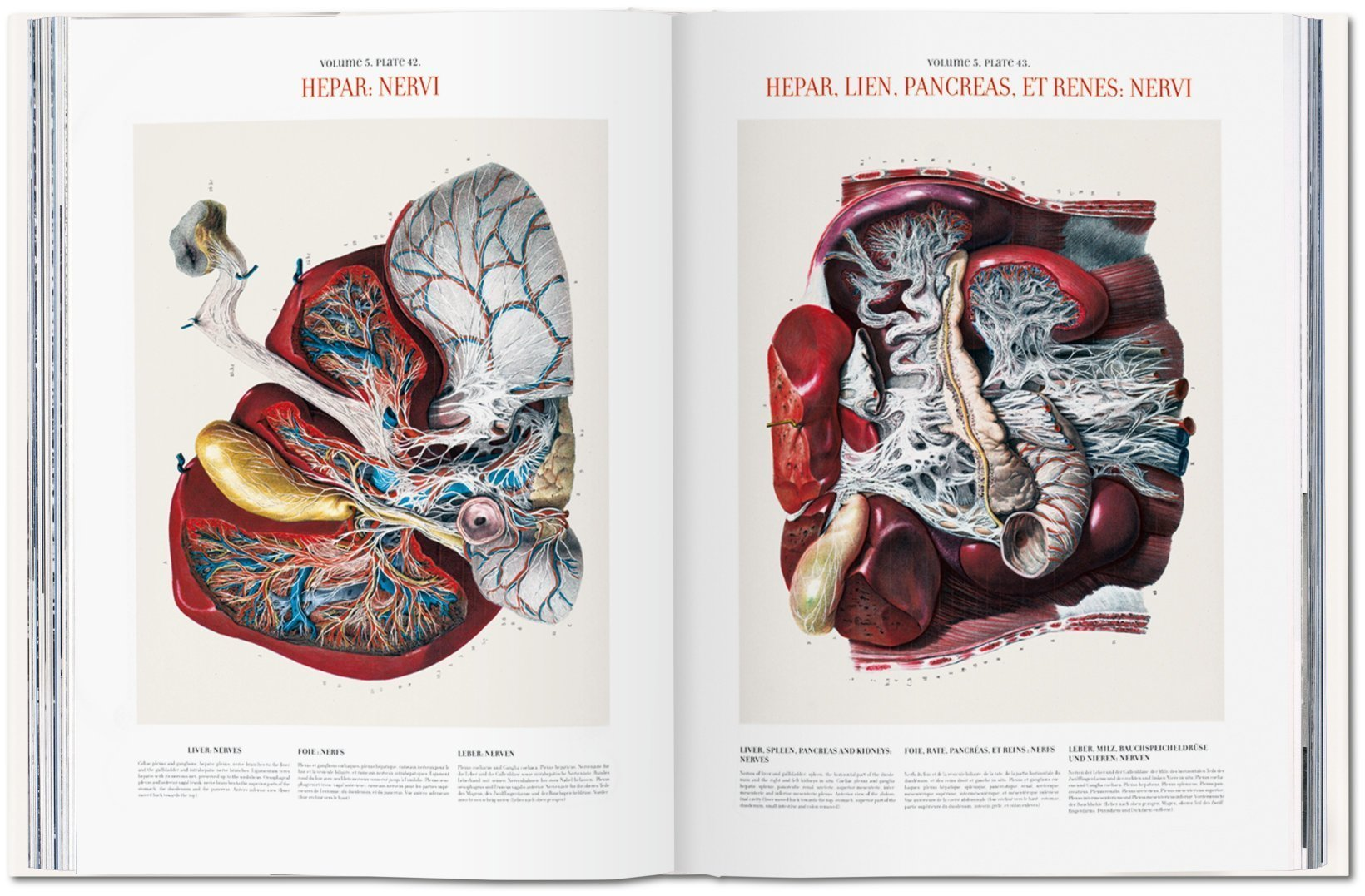 Bourgery Atlas Of Human Anatomy And Surgery Multilingual Edition