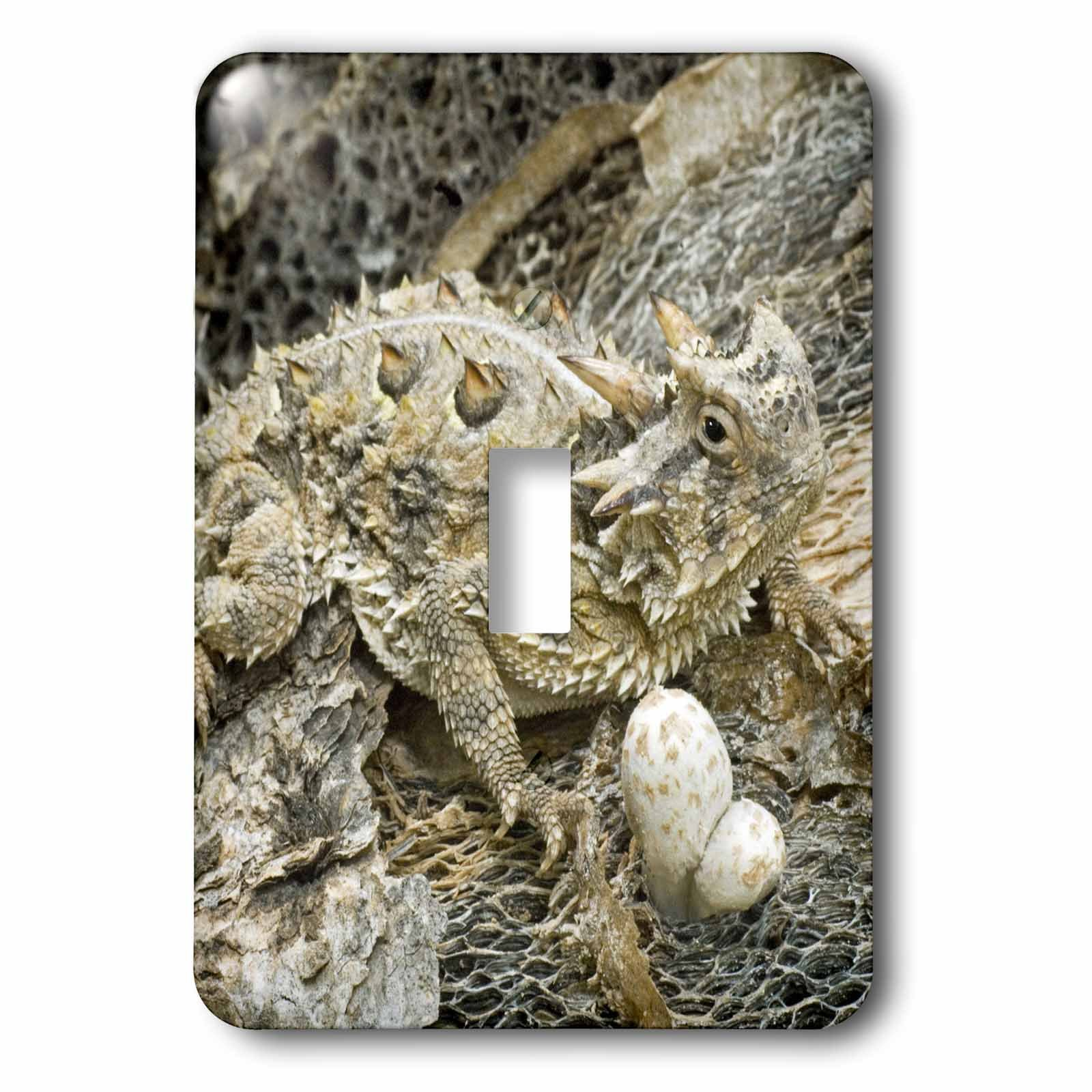 3dRose lsp_94394_1 Usa, Texas, Rio Grande Valley Horned Lizard Us44 Bja0134 Jaynes Gallery Light Switch Cover