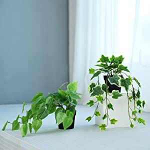 Hejdeco Artificial Ivy Epipremnum Hanging Plants 2 Pack, Short Trail Vine, Mixed Display, Perfect for Small Space Decor (Green/Yellow)