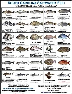 Tackle Box I.D. South Carolina Saltwater Fish Identification Card Set