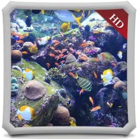 Aquatic Beauty HD - AQUARIUM Wallpaper