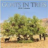 2018 Goats in Trees Calendar - 12 x 12 Wall Calendar - With 210 Calendar Stickers