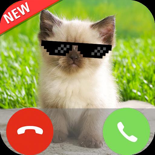 Fashion Kitten Call Cat ()