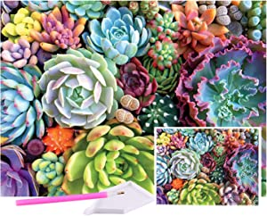 5D Diamond Painting Succulents Kits,Most Popular DIY Decoration, Used for Bedroom, Dining Room, and Home Decoration. 5d Square Diamond Painting, Gift for Parents and Children (12/16) inch