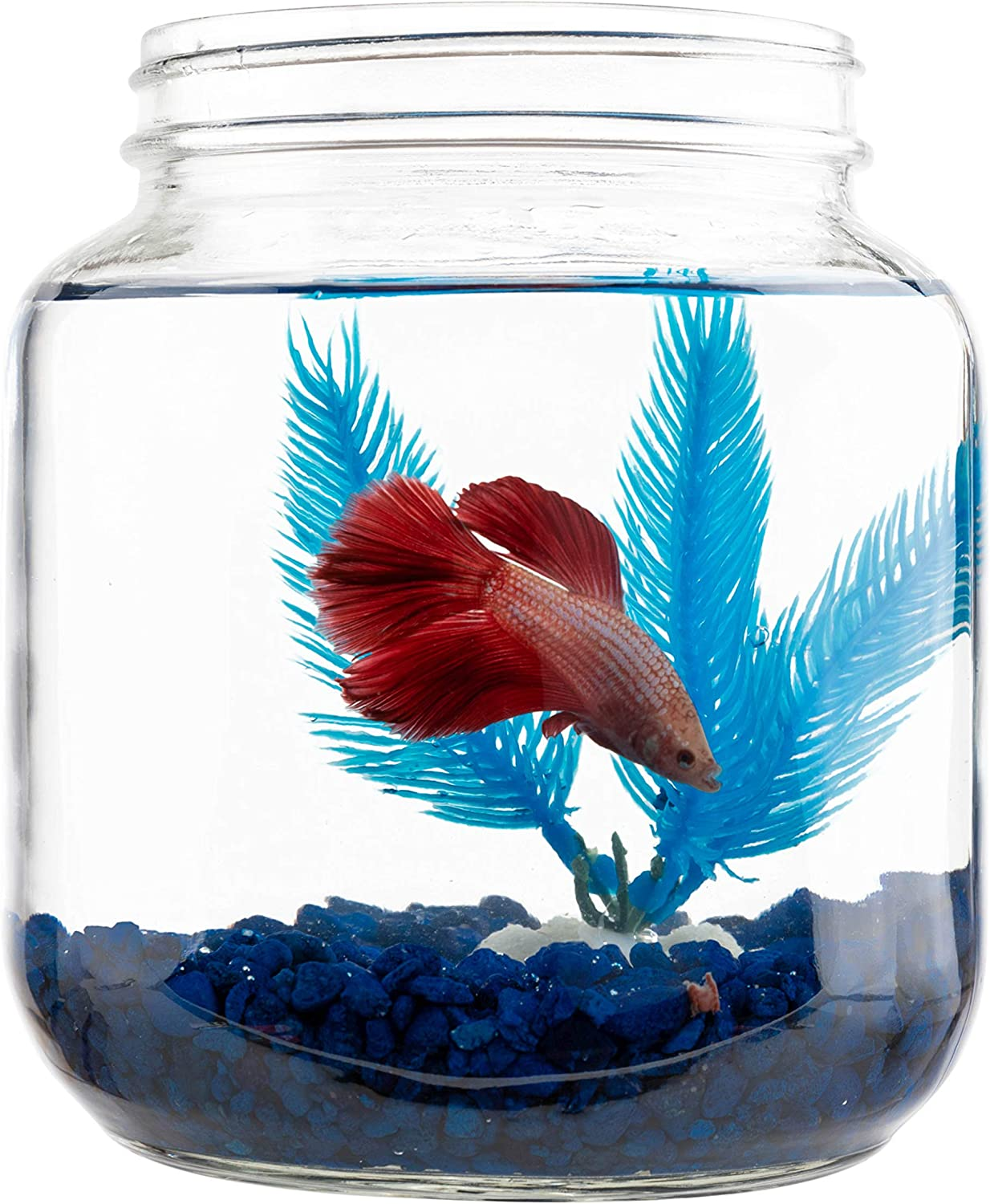 Decorative Glass Jar Betta Fish Bowl with Aquarium Gravel, Betta Fish Food and Rubber Plant - Half Gallon Betta Fish Tank with Wide Mouth (Fish not Included)