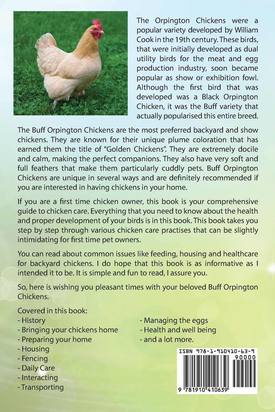 buff orpington chickens as pets buff orpington chickens owner s