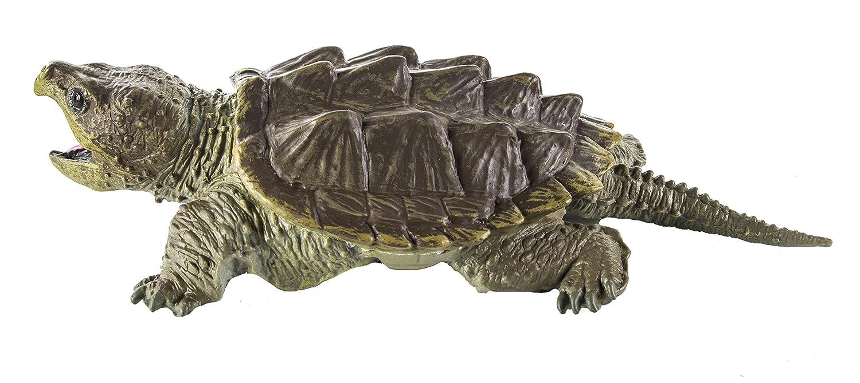 Warning turtles amp tortoises inc - Warning Turtles Amp Tortoises Inc 6
