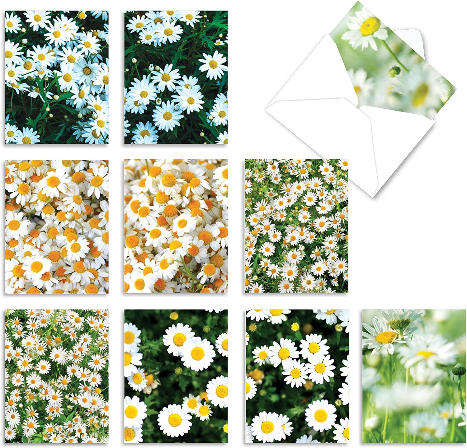 The Best Card Company - 10 Flower All Occasion Blank Cards (4 x 5.12 Inch) - Boxed Cards with Envelopes - Oopsy Daisies M6031