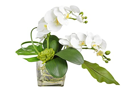 Amazon Creative Displays Orchids And Tropical Leaves With Curly
