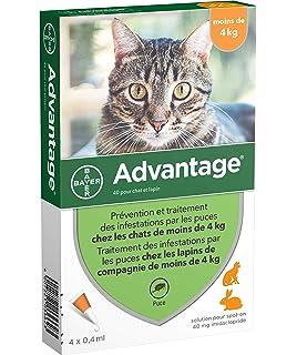 Advantage 80 para gatos > 4 kg - 4 pipetas: Amazon.es ...