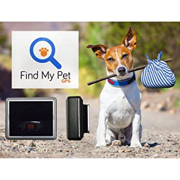 Find My Pet Classic Gps Dog Tracker Smart Collar For Dogs Real Time Tracking