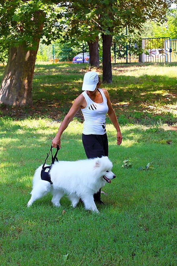 Nature Pet Hunde Tragehilfe Xxl Hunde Gehhilfe Hunde Rehahilfe Das Hilfsgeschirr FŸr Probleme An Der WirbelsŠule Der HŸfte Und Den Knien Ihres Hundes Premium Marke FŸr Hilfsmittel Aus Neopren Haustier