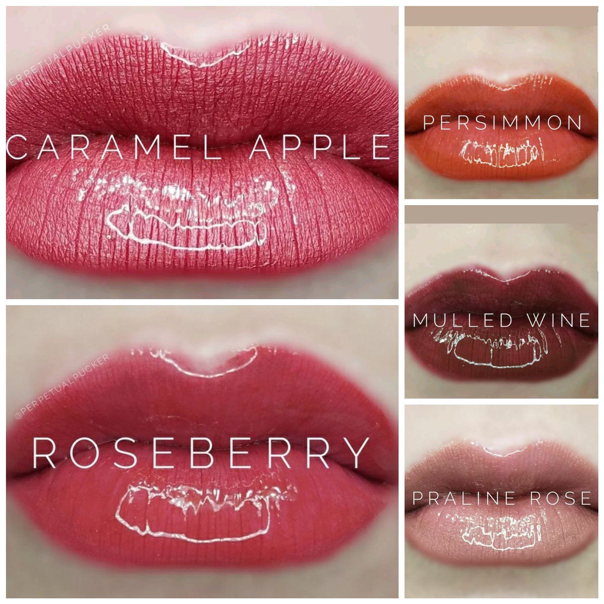 LIPSENSE BUNDLE 5 COLORS:1 ROSEBERRY, 1 PRALINE ROSE,1 CARAMEL APPLE, 1 PERSIMMON AND 1 MULLED WINE