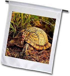 3dRose fl_91057_1 Eastern Box Turtle, Michigan-Us23 Aje0005-Adam Jones Garden Flag, 12 by 18-Inch