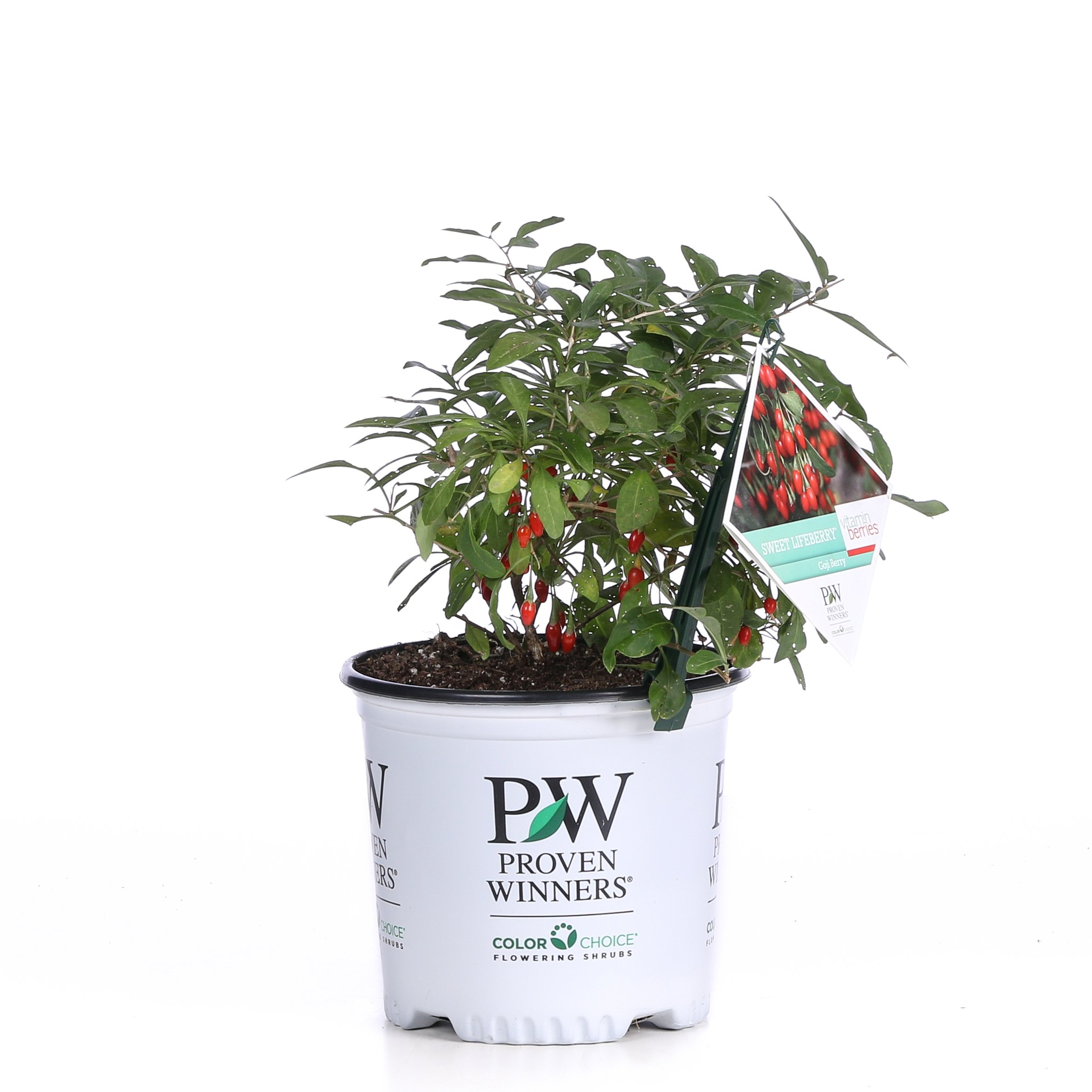 1 Gal. Sweet Lifeberry Goji Berry (Lycium) Live Shrub, Purple Flowers and Red Fruit