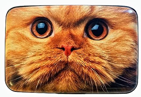 Amazon.com: Grupo higo diseño naranja cara de gato Robo de ...