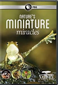 NATURE: Nature's Miniature Miracles