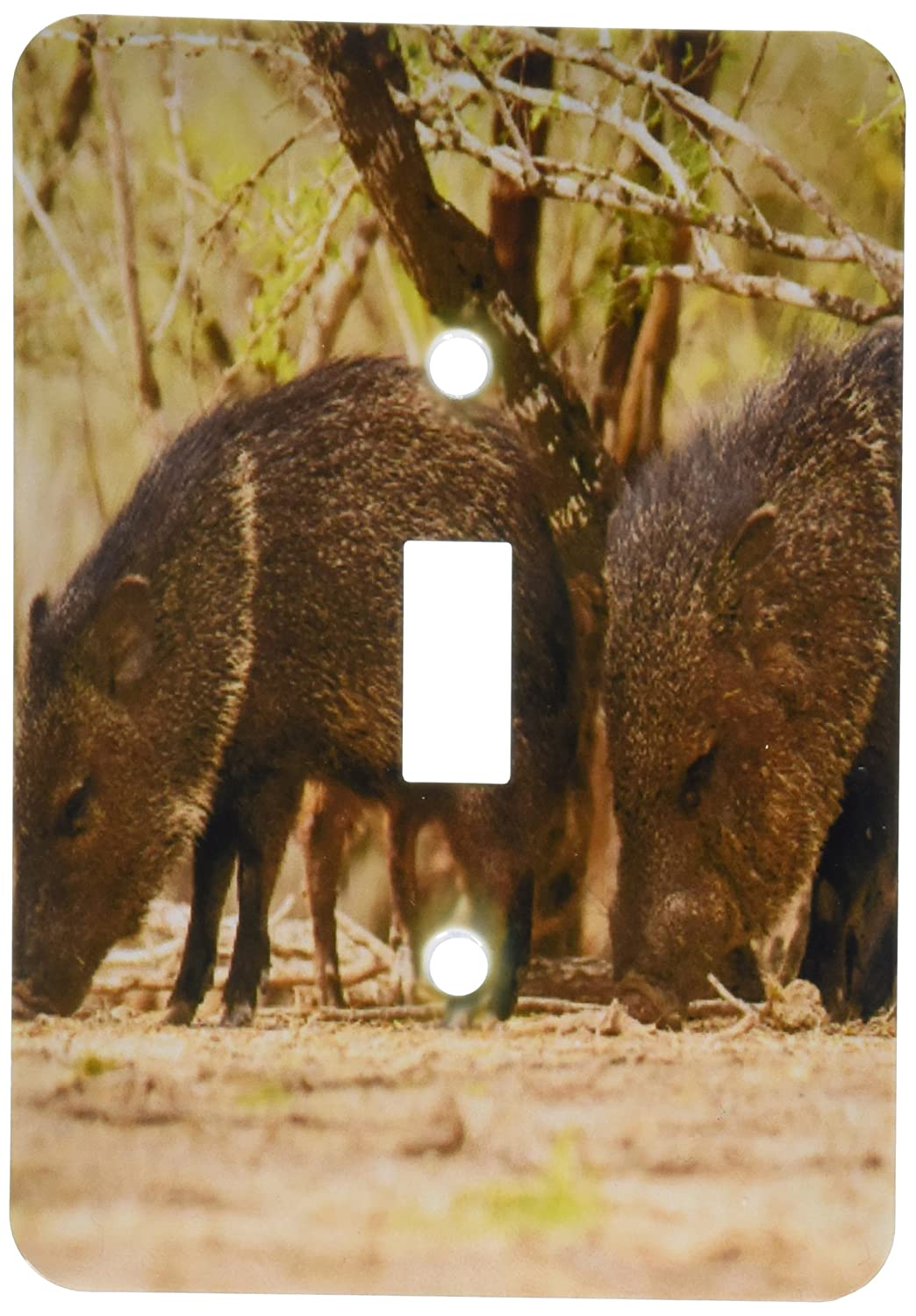 Toggle Switch Texas Javelinas Or Collared Peccaries 3dRose LSP/_190785/_1USA Hidalgo County