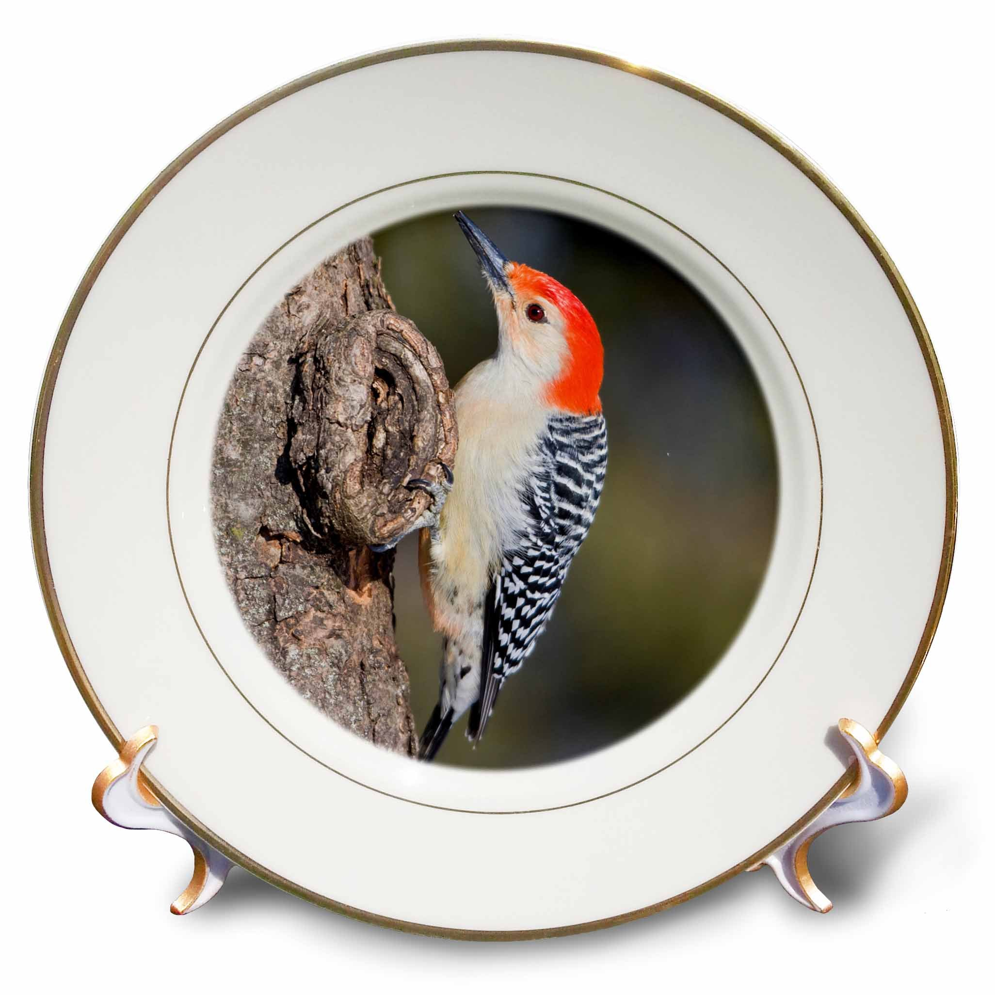 3dRose cp_206263_1 Marion Co IL Red bellied Woodpecker feeding nestling at Nest Cavity Porcelain Plate, 8''