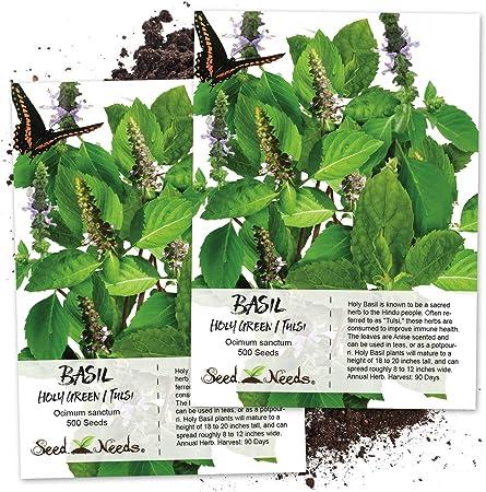 Amazon.com: Paquete de 500 semillas, Holy Basil/Tulsi ...