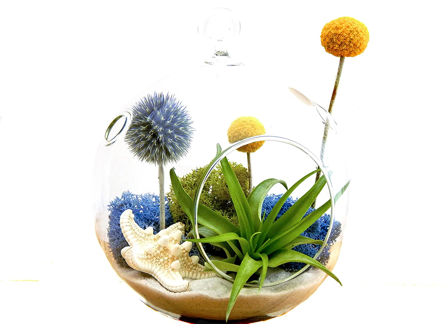 Bliss Gardens Air Plant Terrarium with Starfish, Moss, Flowers, 5 Round Glass -Deep Blue Sea