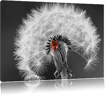 schöner Marienkäfer auf Pusteblume schwarz/weiß Format: 120x80 auf  Leinwand, XXL riesige Bilder fertig gerahmt mit Keilrahmen, Kunstdruck auf  ...