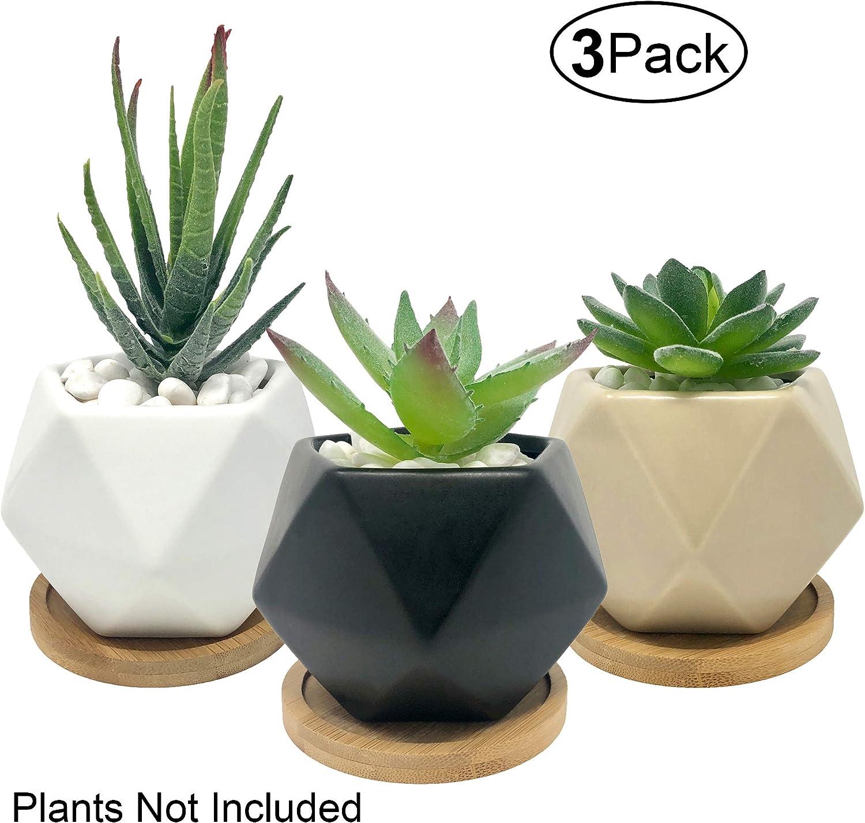 Bluegrid Succulent Pots 3 Inch