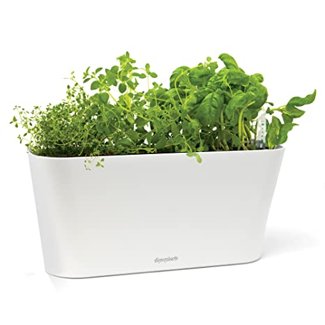 self watering windowsill planter container aquaphoric herb garden tub self watering passive hydroponic planter fiber soil keeps indoor amazoncom
