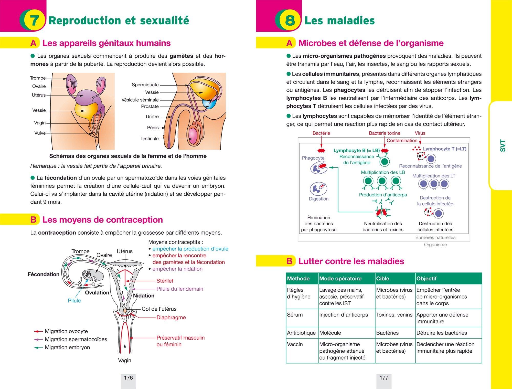 Annales Annabrevet 2017 Physique-chimie SVT Technologie 3e: sujets et corrigés, nouveau brevet: Amazon.es: Sonia Madani, Joël Carrasco, Gaëlle Cormerais, ...