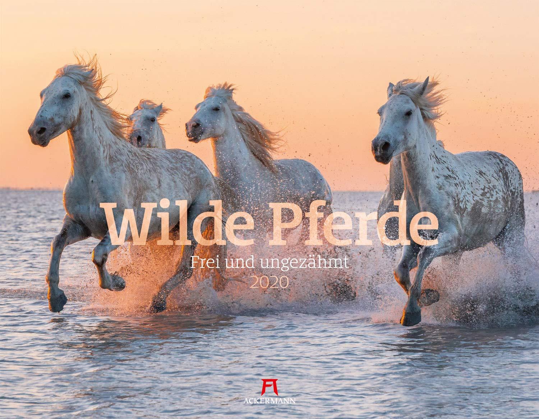 Wilde Pferde 2020 Wandkalender Im Querformat  54x42 Cm    Tierkalender   Pferdekalender Mit Monatskalendarium