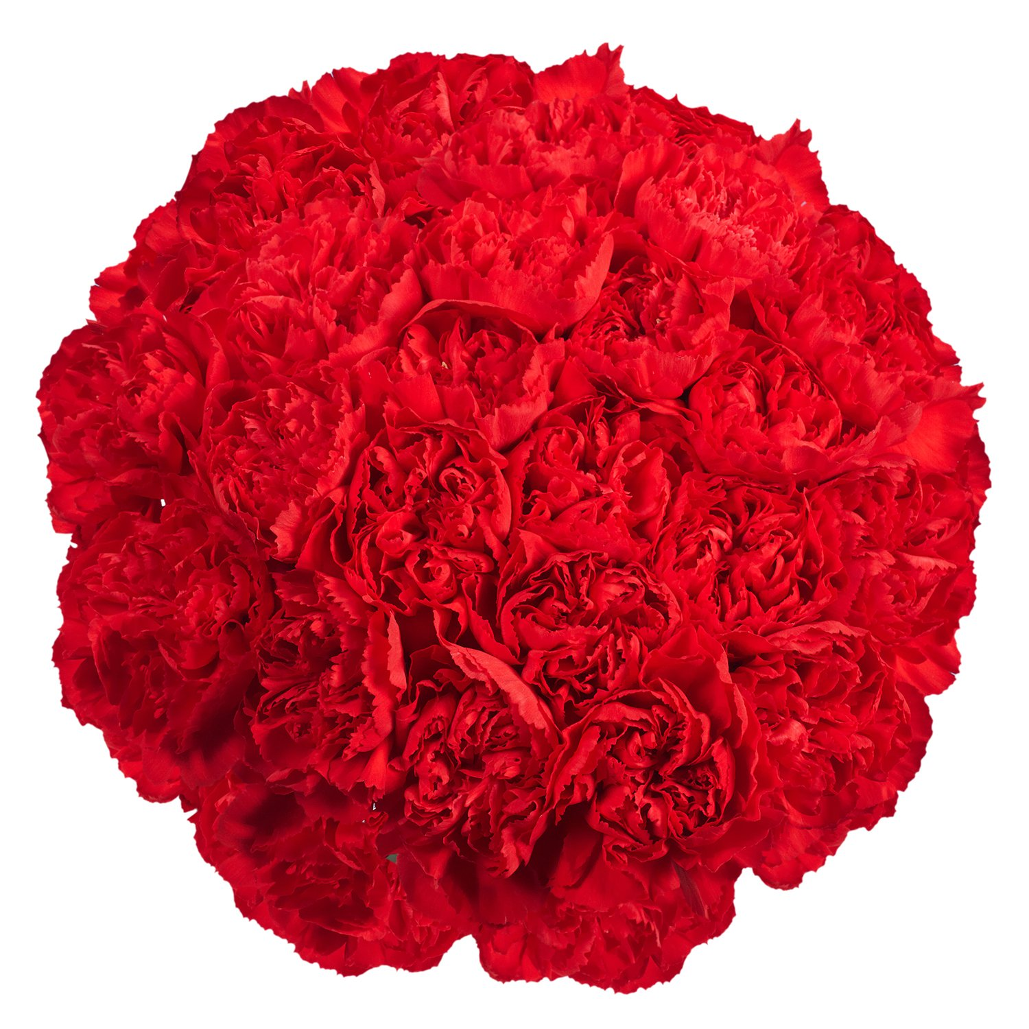 GlobalRose 200 Fresh Cut Red Carnations - Fresh Flowers Wholesale- Express Delivery