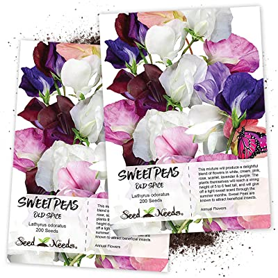 Seed Needs, Old Spice Sweet Pea (Lathyrus odoratus) Twin Pack of 200 Seeds Each : Flowering Plants : Garden & Outdoor