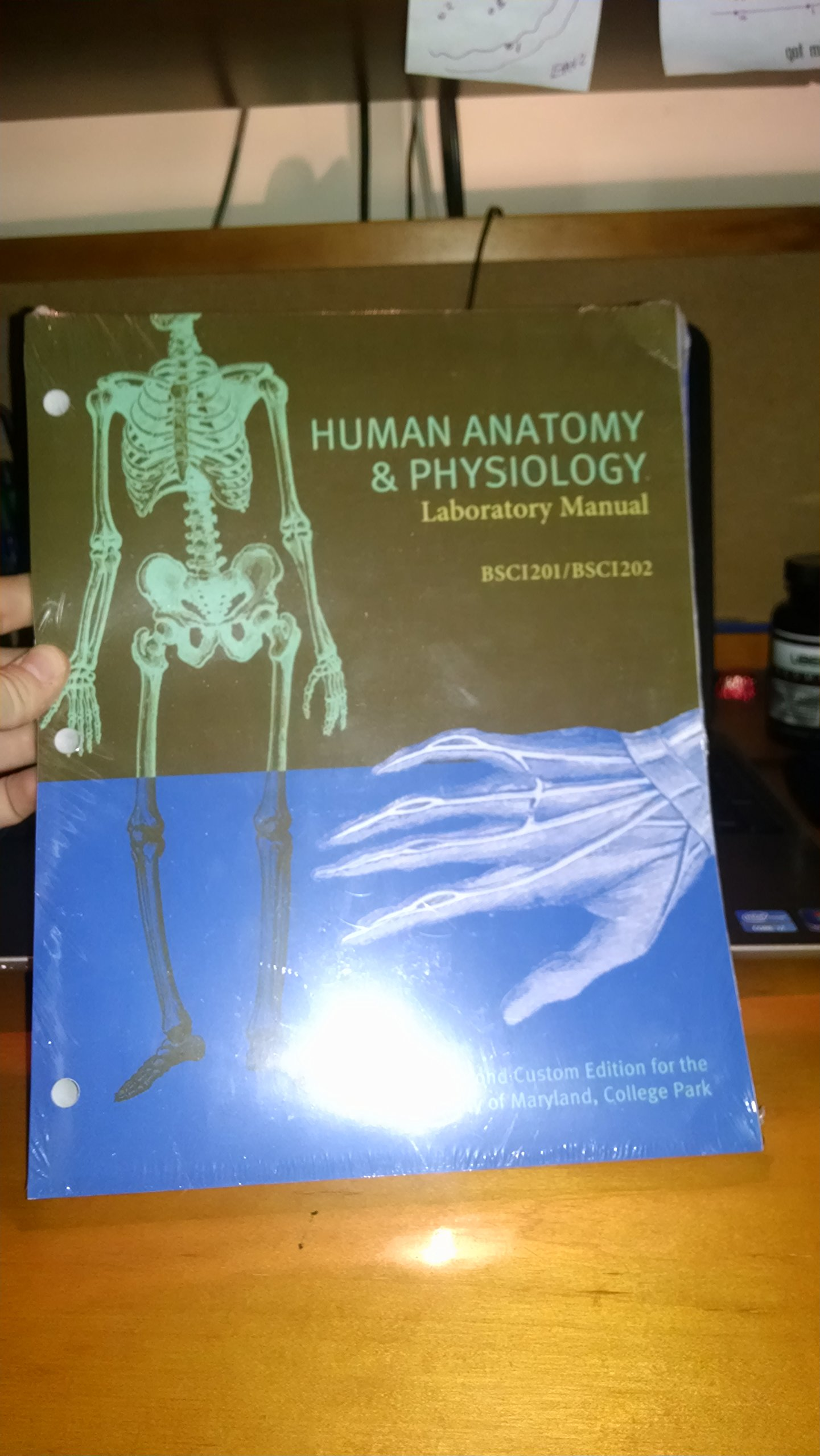 human anatomy and physiology lab manual exercise 19
