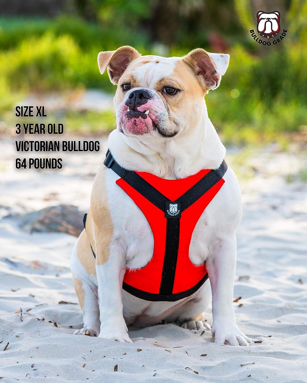 Bulldog Grade Arnés Reflectante para Perro Tirar, con asa ...