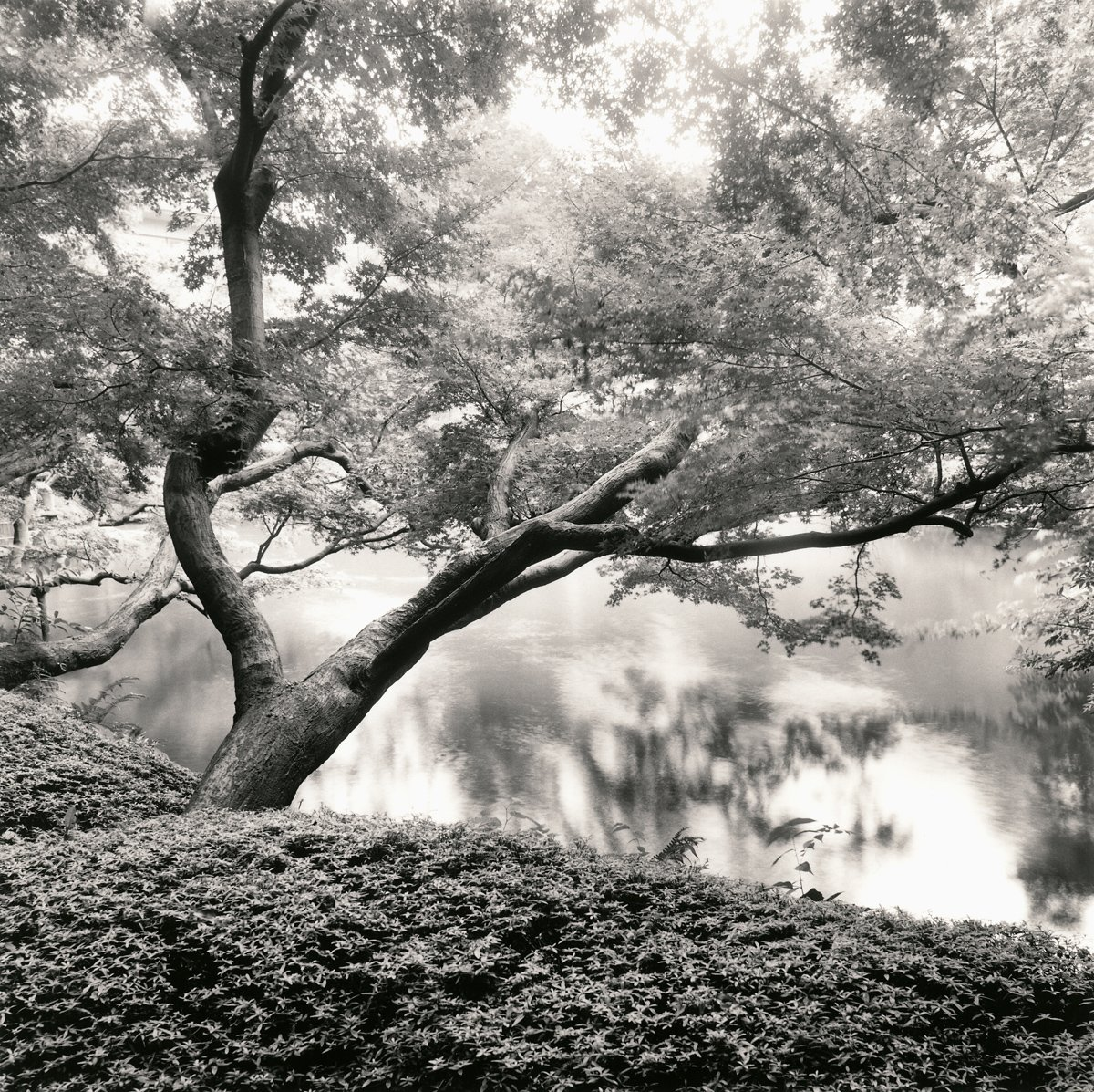 Tree and Pond, Tokyo, Japan 2001