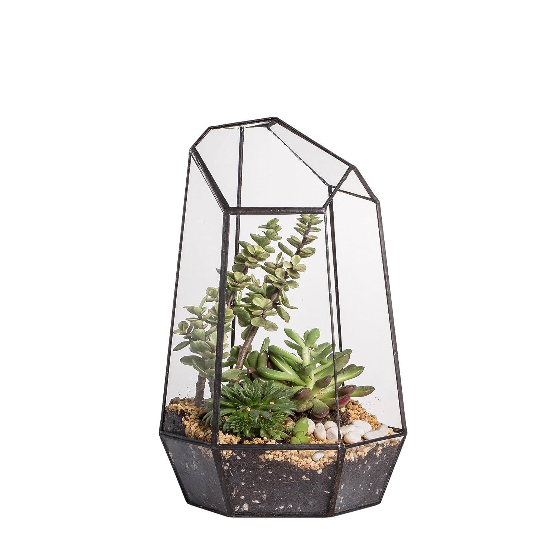 NCYP Terrario per piante grasse a forma irregolare, superficie superiore in vetro, altezza 25 cm 20150620003L