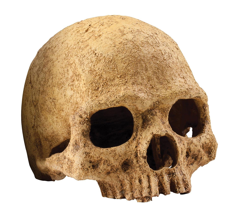 Exo Terra Primate Skull Hideaway PT2855