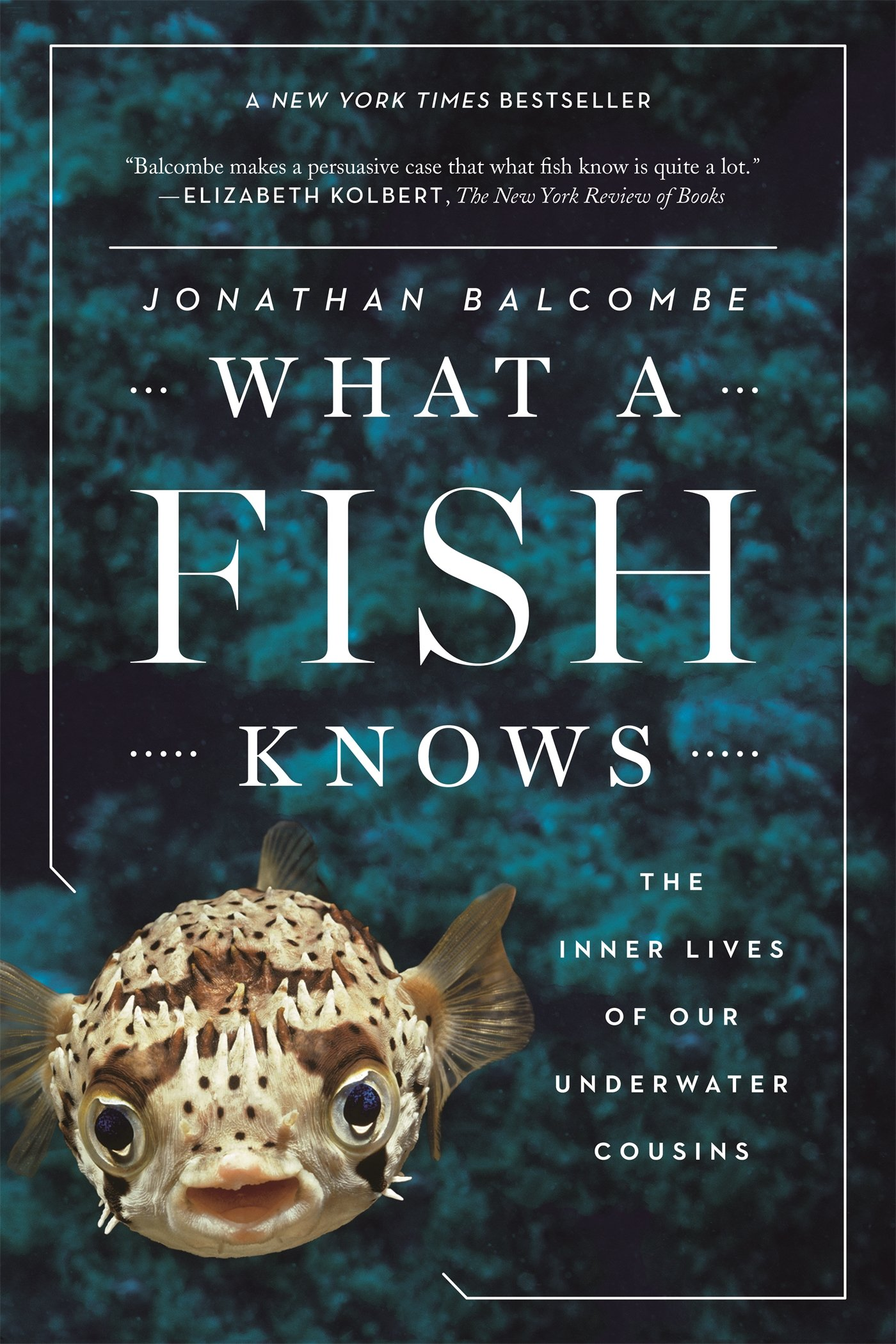 What A Fish Knows The Inner Lives Of Our Underwater Cousins Jonathan Balcombe 9780374537098 Amazon Books