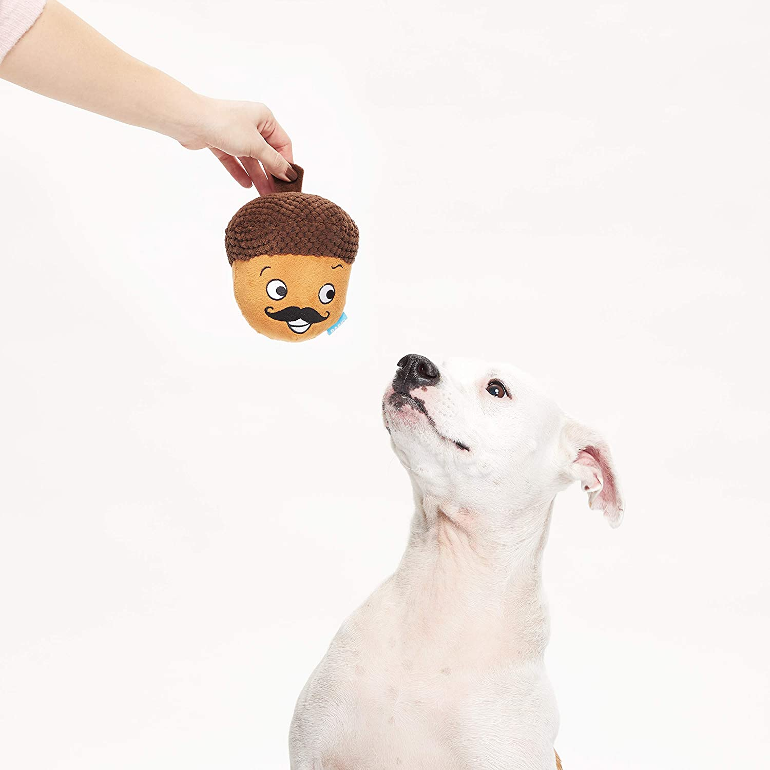 Pet Supplies Barkbox Monsieur Acorn For Medium To Large Dogs Plush Bonus Free Toy Within A Com
