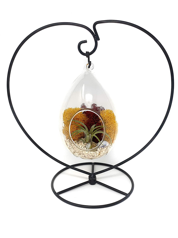 Creations by Nathalie 4 H *DIY Terrarium Kit* Glass Egg Live Air Plant Terrarium With Heart Stand