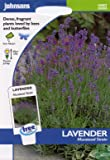 johnsons seeds - Pictorial Pack - Fiore - Lavanda Munstead Strain - 150 Semi