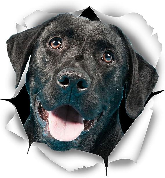 Winston Bear 3d Hund Aufkleber 2er Pack Süße Schwarze Labrador Aufkleber Für Wand Kühlschrank Schwarzer Labrador Aufkleber Küche Haushalt