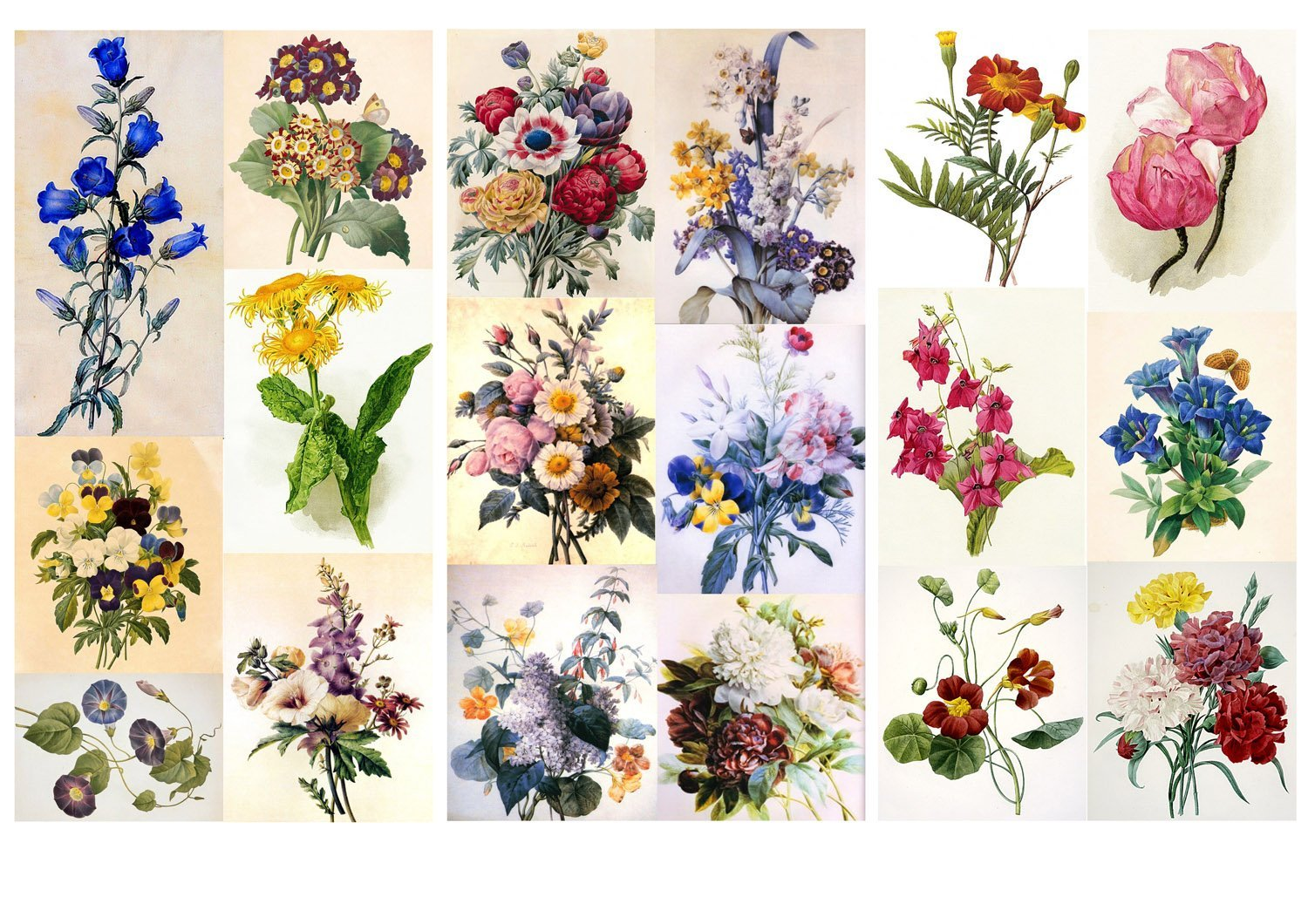Decoupage Paper Pack (12 Sheets A4/8x11) Flowers Redoute Wildflowers FLONZ Vintage Ephemera