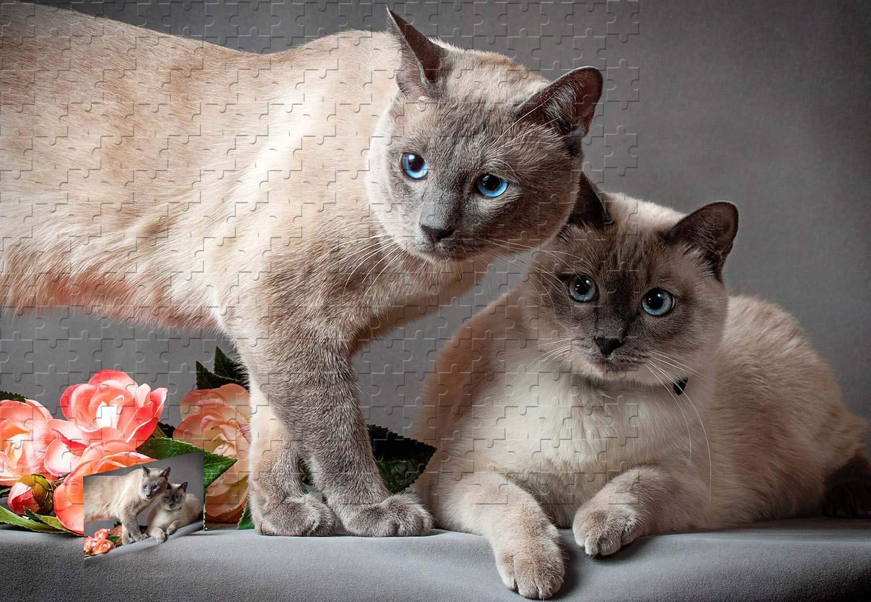 【海外限定】 PigBangbang 29.5×19.6インチ プレミアムバスウッド Lサイズ PigBangbang タイキャット 2匹の猫の花 2匹の猫の花 グレーの背景 1000ピースジグソーパズル B07HYG41Y8 B07HYG41Y8, athlete1:86b26de0 --- sinefi.org.br