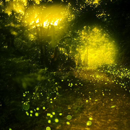 Fireflies Live Wallpapers -